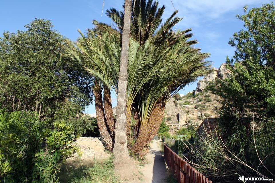 Ruta de las Norias en Abarán, Murcia. Sendero hacia la Noria de la Hoya de D.García