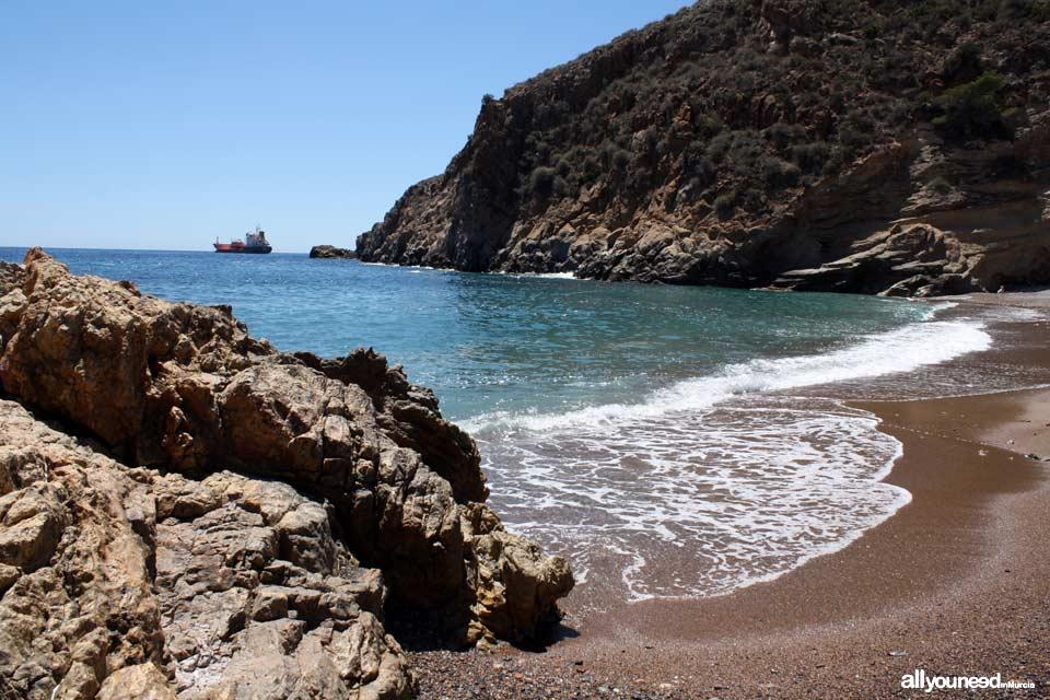 El Bolete Grande Cove. Tiñoso Cape