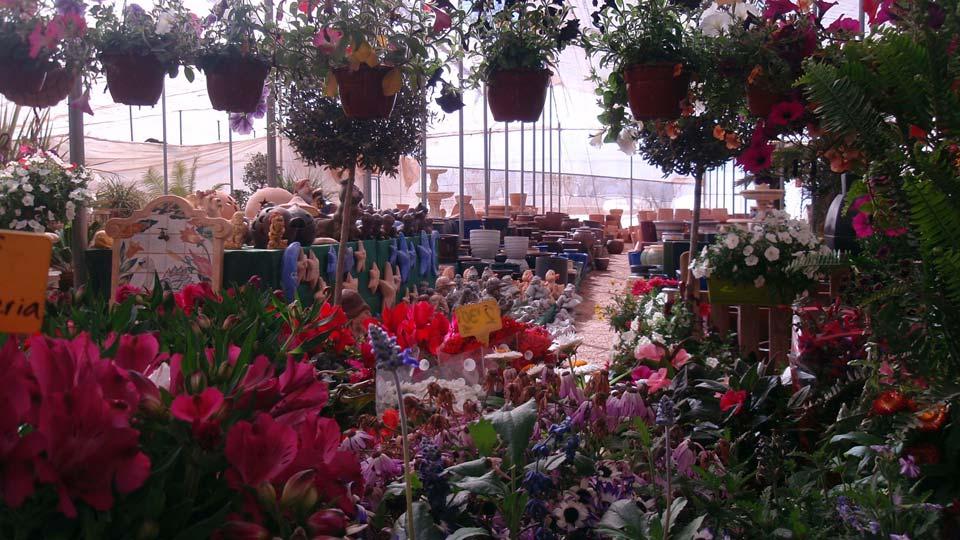 Vivero y Centro de  jardinería Villa Garden Golf . Los Belones- La Manga