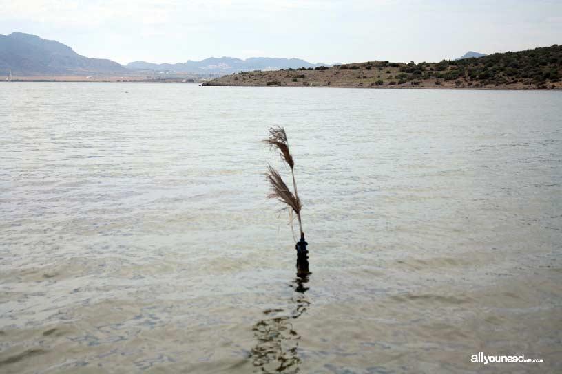 Isla del Ciervo en el Mar Menor. Sendero submarino y marcas