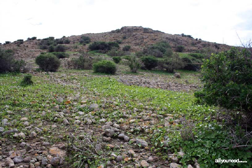 Isla del Ciervo en el Mar Menor. Vegetación