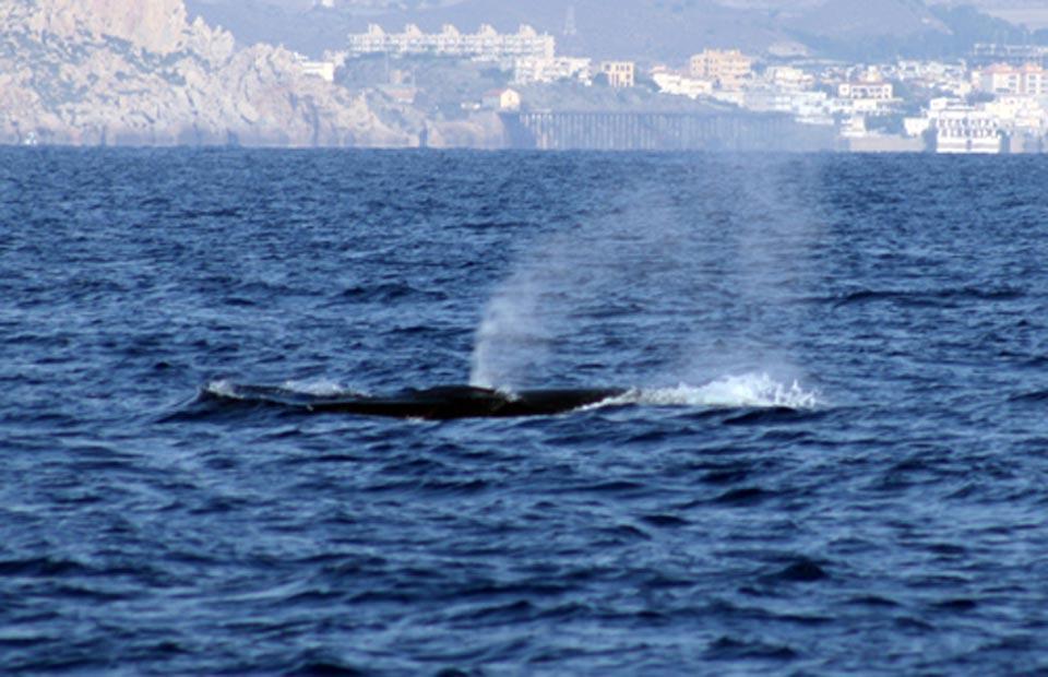 Cetáceos y Navegación. Turismo de aventura y naturaleza
