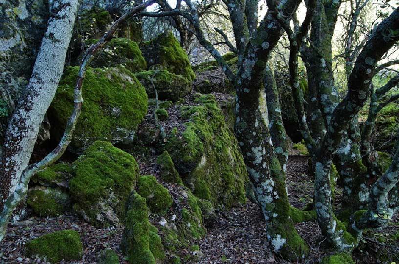 Descubriendo Moratalla. El bosque animado