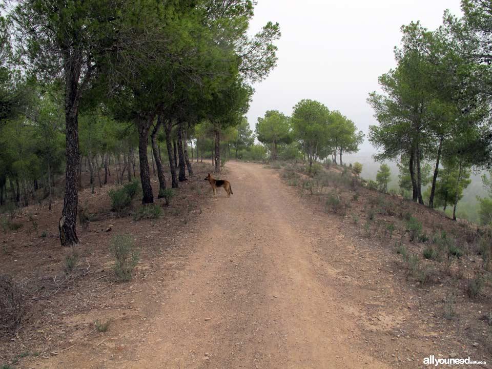 Barranco Blanco pathway. PR-MU52