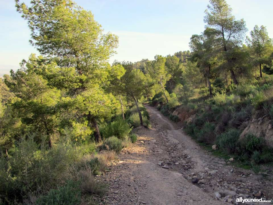 Camino de los Arejos pathway. PR-MU34