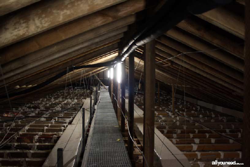 Museo Municipal Palacio Barón de Benifayó en San Pedro del Pinatar