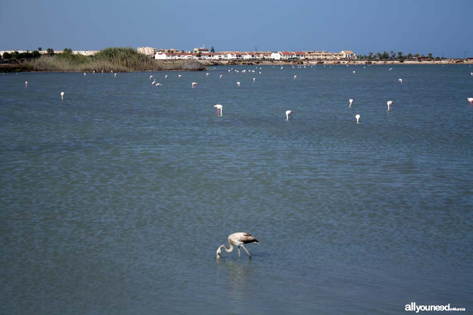 Regional Park  of the Salt Flats and Sand Areas of San Pedro del Pinatar