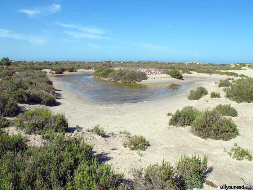 Parque Regional Salinas y Arenales de San Pedro del Pinatar