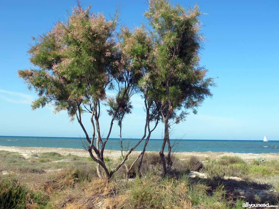 Playa de Punta de Algas Playas de San Pedro del Pinatar