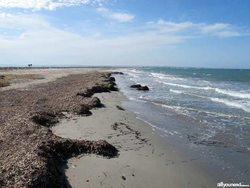 Sendero de Las Encañizada. Playa Punta de Algas. Al fondo el Puerto