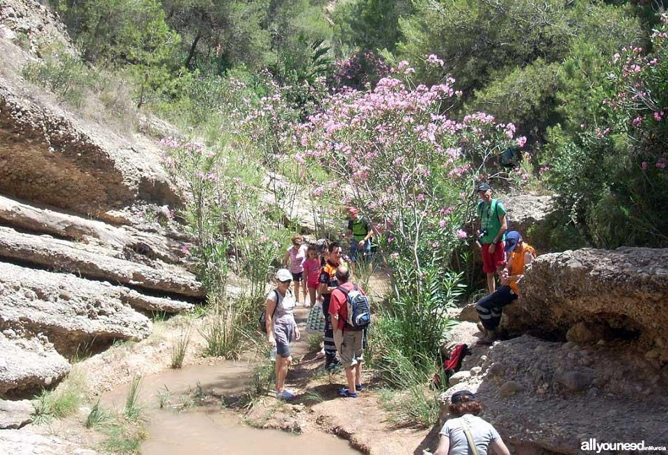 Turismo Activo y de Aventura en Murcia. Senderismo por el río Chícamo en Abanilla