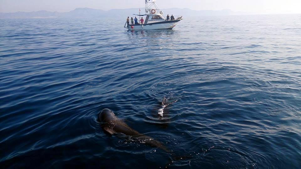Turismo Activo y de Aventura en Murcia. Avistamiento de cetáceos