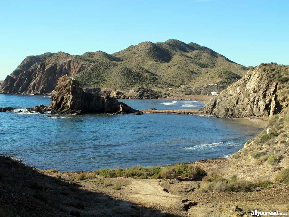 Pino Cove. Aguilas