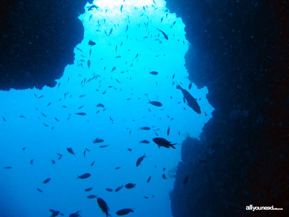 Diving in Cabo de Palos. The marine reserve of Hormigas Islands. Murcia -Spain-