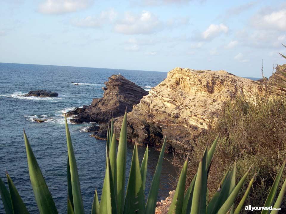 Roja Cove