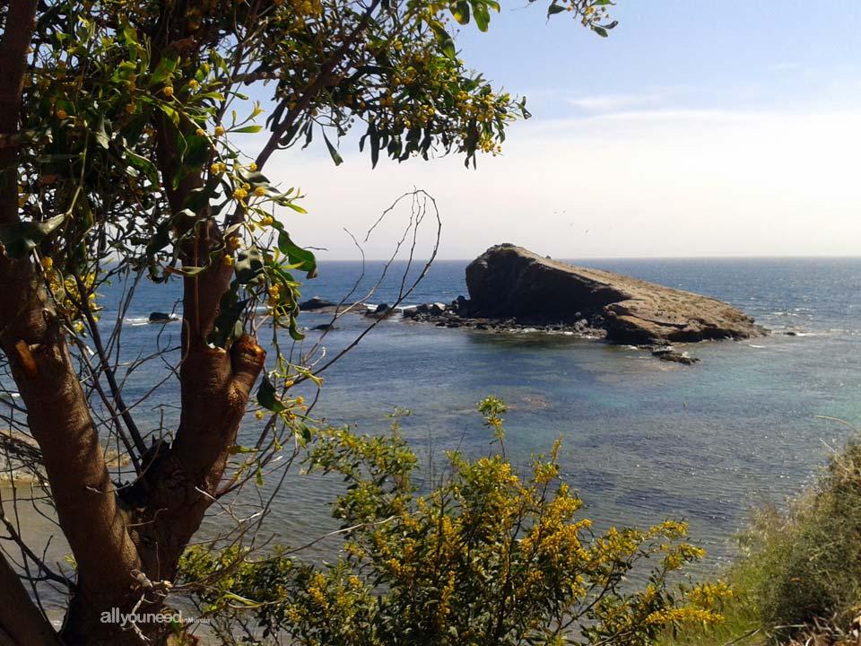 Descargador Cove