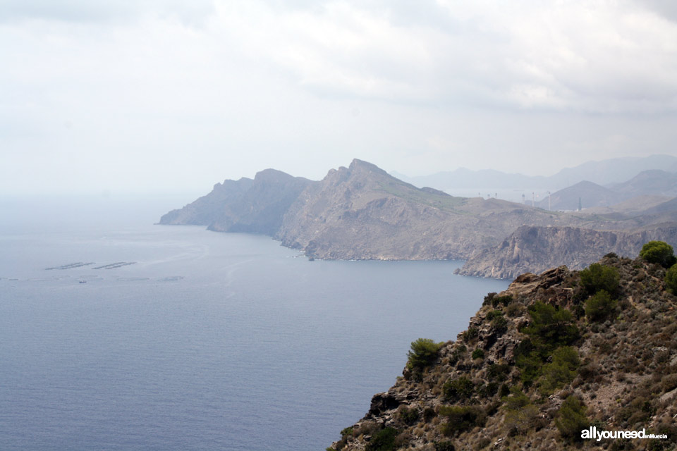 Monte de las Cenizas. Views of Portman Bay