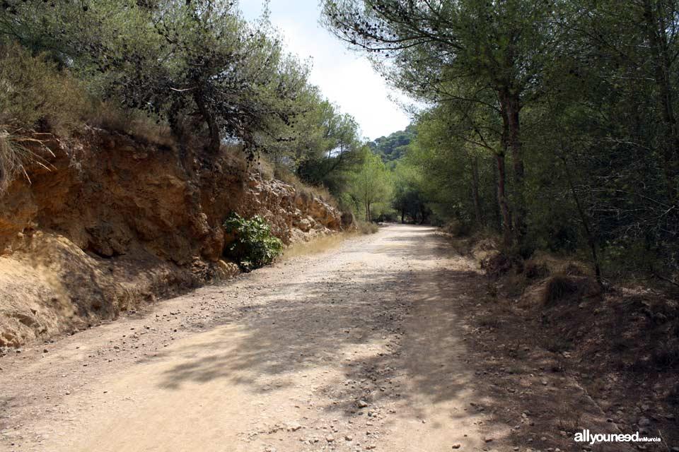 Trail to Monte de las Cenizas