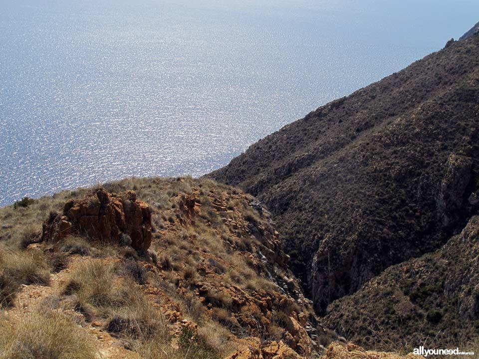 Mojarra Cove