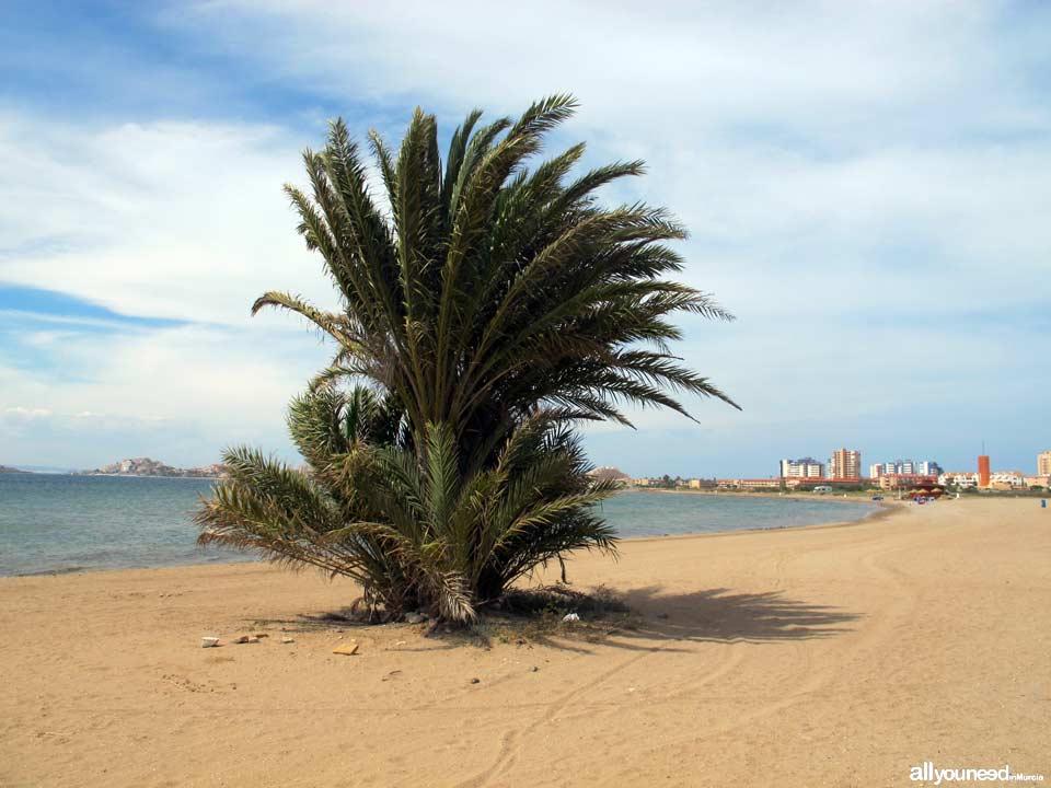 Vivero Beach