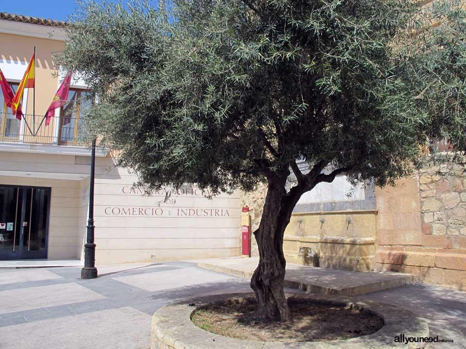 Plaza y Fuente del Caño