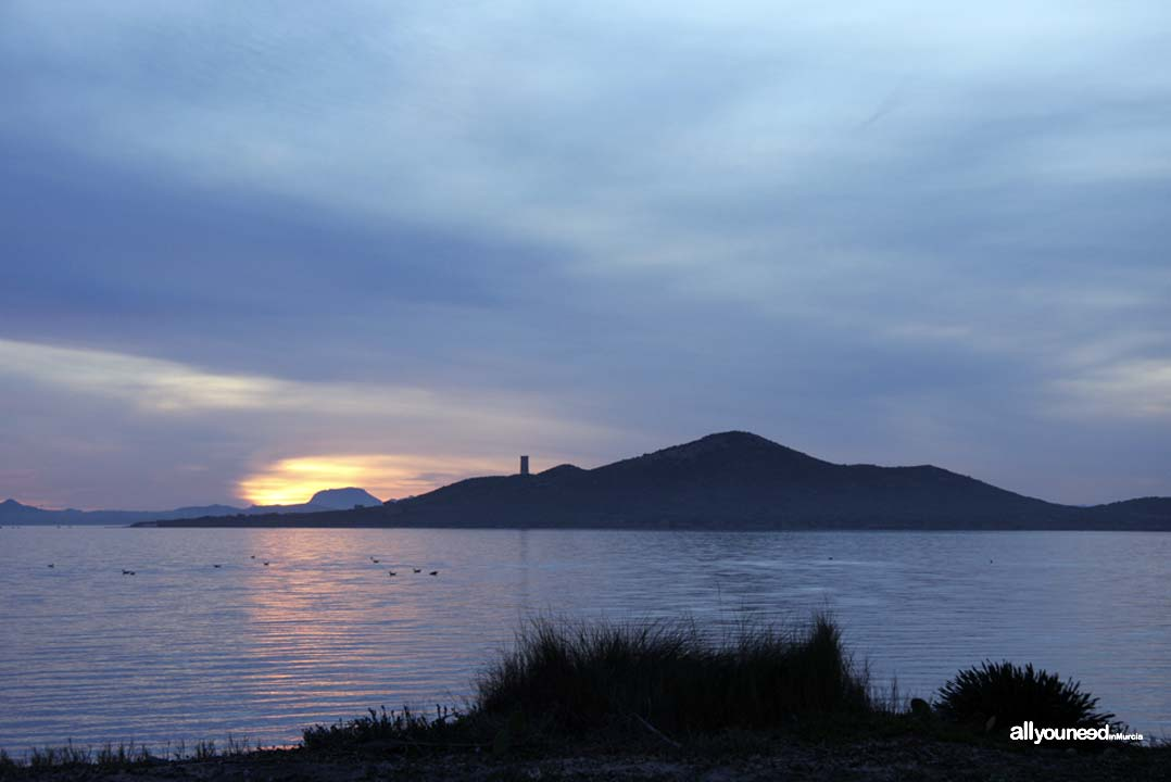 Barón Island. Mar Menor Islands and Open Spaces