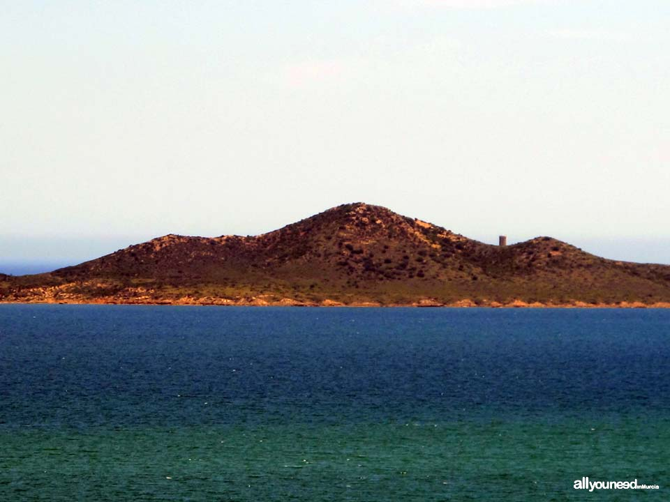 Barón Island in Mar Menor