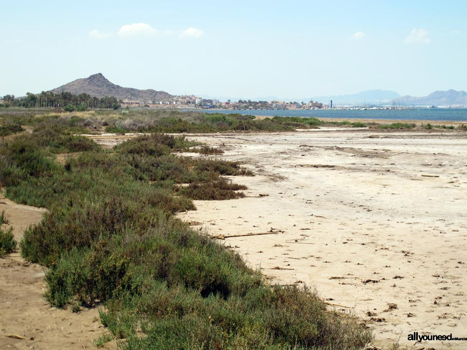 El Saladar de Lo Poyo. Mar Menor Islands and Open Spaces