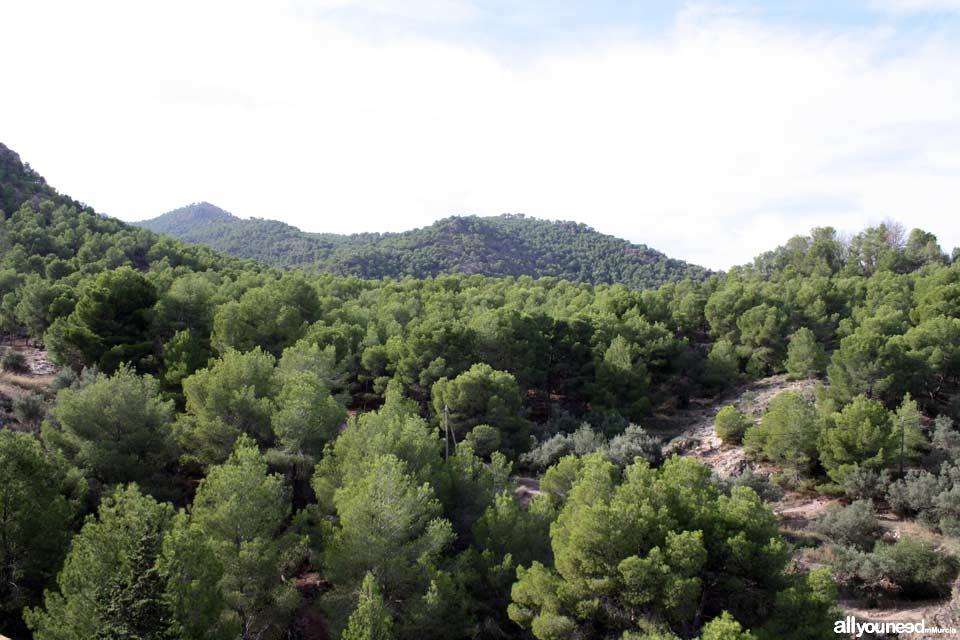 Parque Regional El Valle y Carrascoy