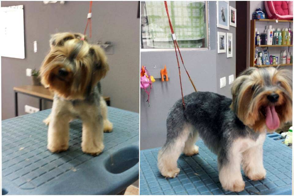 Cachito Guau. Luna. Dog Grooming Saloon in Murcia
