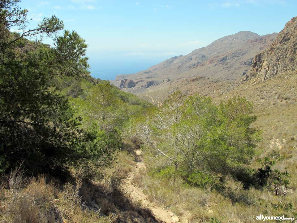 Route to Cerrada Cove. Tiñoso Cape