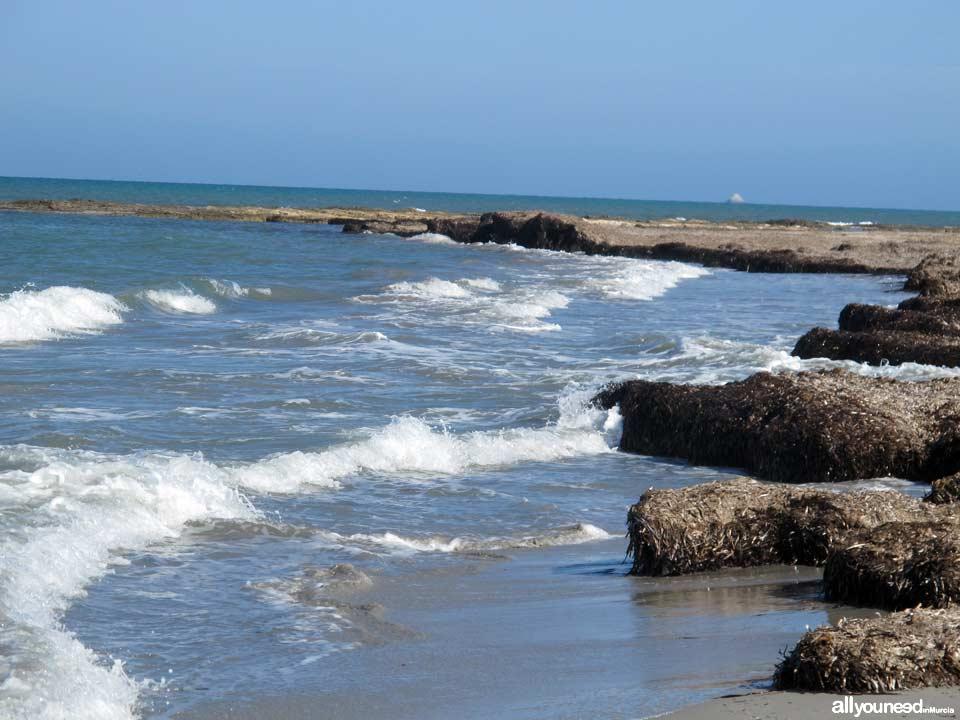Playa de Punta de Algas en San Pedro del Pinatar